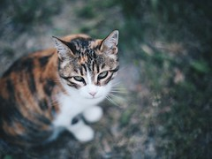 the cat wouldn't go away (pierfrancescacasadio) Tags: cat