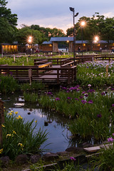 51Yamada Pond Park (anglo10) Tags: sunset flower japan