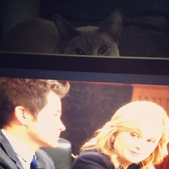 I can't quite pick it, but there's something unsettling about this episode of #ParksAndRec (tommy_is) Tags: square squareformat iphoneography instagramapp uploaded:by=instagram