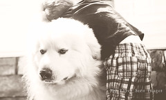 Little Boy, Big Dog (austinsGG) Tags: family boy bw dog love austin greatpyrenees gentlegiant pioneerwoman mythreesons thesemoments photographyskills creativebwkids