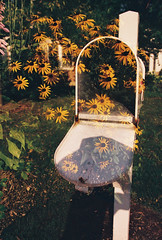 Mail (palombellaphotos) Tags: flowers sunlight color film nature mailbox canon rebel iso100 lomography exposure earth doubleexposure f14 double 200 sunflowers noedit 24mm palombellaphotos