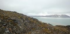 The View From Generalfjella (Derbyshire Harrier) Tags: summer svalbard arctic cropped spitsbergen tundra ortelius reindeerantler naturetrek higharctic krossfjorden generalfjella fanciullipynten