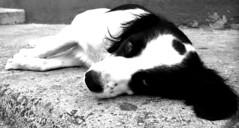 perro (*paz) Tags: chile blancoynegro valparaiso blackwhite bn perro