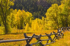 Fence and fall colors (Mysophie08) Tags: fence grandmother unitedstatesofamerica wyoming thumbsup rockon infocus grandtetonnationalpark highquality twothumbsup bigmomma gamewinner autumnfall cy2 thumbwrestler 15challengeswinner friendlychallenges thechallengefactory fotocompetitonbronze yourockwinner yourockunanimous herowinner ultraherowinner storybookwinner showbizwinner storybookbtd3rd gamex3winner gamex2sweepwinner pregamewinner storybookttwwinner agcgsweepchallengewinner agcgsweepwinner