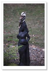 Feathered Headdress-4825 (Barbara J H) Tags: australia qld kookaburra australianwildlife dacelonovaeguineae laughingkookaburra australiannativebird imbil birdsofaustralia barbarajh maryvalley yabbasprings