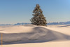 Gurnigel (Edi Bähler) Tags: berg gurnigel himmel hotpick kantonbern landschaft natur schnee schweiz switzerland tanne landscape mountain nature sky snow nikond800 2470mmf28