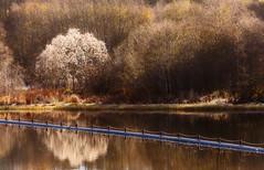 Transition, Nidelva (kkorsan) Tags: autumn norway river transition trondheim srtrndelag nidelva vreleirfoss centralnorway