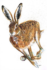 Dash (jina11) Tags: brown art nature animal illustration ink painting hare drawing mixedmedia wildlife running watercolour british brownhare