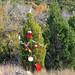 Trees_of_Loop_360_2013_060