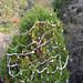Trees_of_Loop_360_2013_050