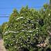 Trees_of_Loop_360_2013_213