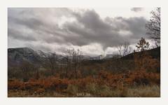 Sierra de Gredos (Blanca Juan) Tags: autumn espaa mountain landscape hojas spain sierra campagna nubes campo otoo montaa autunno naranja montagna gredos spagna avila sierradegredos