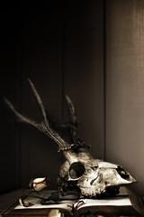 (Ellie Ellis) Tags: old stilllife loss leaves rose vintage dark dead death skull book petals pretty moody shadows sad mourning deer antlers spooky mysterious horror romantic softfocus dreamy dreamlike atmospheric shallowdepthoffield plainbackground arcangelimages