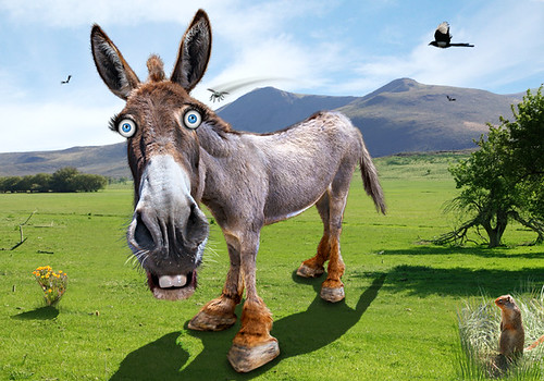From flickr.com: The Democratic Donkey is nearly as emaciated as the Democratic Party {MID-144058}