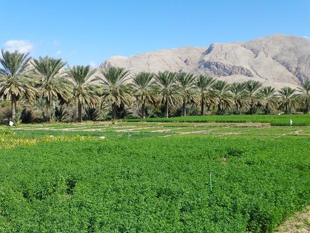 Rodamundos: Oman, Montagna, wadis y desierto.