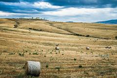 Tuscan countryside near Pienza (Alessandro Boletti) Tags: panorama landscape landscapes countryside campagna tuscany siena toscana valdorcia paesaggi montichiello