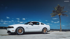 Mustang 5.0 on MultiForged MS15 Contoured (MORR Wheels) Tags: wheels rims forged concave monoblock morr 3pc morrwheels