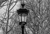 Paris- percing (yannickbenassi) Tags: paris cadenas arbre percing panasonicdmcfz200