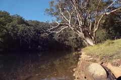 Audley Park Picnic 093 (everyday sh_ter) Tags: park beach forest sydney waterfalls kookaburra wattamolla garie royalnationalpark audley stanwell hackerriver