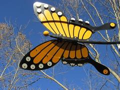 Senza Monarch Butterfly (Nancy D. Brown) Tags: california butterfly monarch napa senza