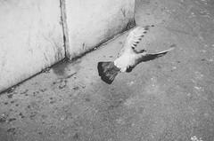 Take off (James ~ Anderson) Tags: paris film pigeon fujifilm x100 vsco