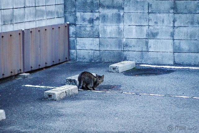 Today's Cat@2015-02-11