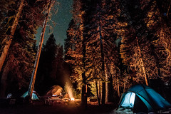 Waiting for the bear... (Tiomax80) Tags: park longexposure travel camping trees summer camp sky usa west tree nature pine night stars outside lights us photo tents nationalpark flickr raw nef nocturnal nps wildlife roadtrip tent pines national campground nuit sequoia campsite exif highiso d610 tiomax