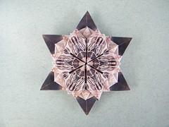 Slavko Star - Natalia Guzowska (Rui.Roda) Tags: stella star origami estrela natalia stern estrella papiroflexia toile slavko papierfalten guzowska