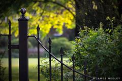 Garden View (James Neeley) Tags: stilllife london chelsea jamesneeley