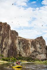 (The Noisy Plume) Tags: travel oregon river idaho rafting swallows owyheeriver owyheecanyonlands