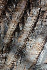 Enclosure..              ( Explore 7 June 16 ) (Julie Rutherford1 ( off/on )) Tags: kensington gardens tree wood explore julie rutherford bark
