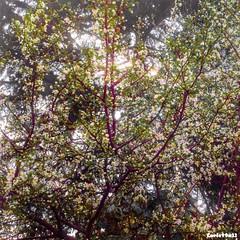 Alberi fioriti... (Carletta20) Tags: trees portrait italy macro art nature beautiful canon landscape photography nikon europa italia colore fotografie magic scenic natura nixon explore product colori ab800 d700 naturetreasures mygearandme exploredgrid