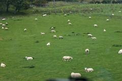 tom 66 (pamelaadam) Tags: autumn animal digital work scotland sheep fotolog september highland aviemore youthwork 2015 churchofscotland thebiggestgroup ellonparishchurch