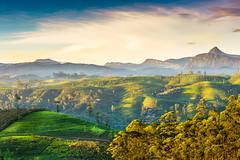 Hatton, Sri Lanka (Heshan de Mel) Tags: mountains sunrise landscape tea srilanka hatton teaplantation vally adamspeak teastate