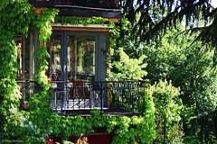 (Ecc) Tags: city italy verde green love primavera spring italia natura dettagli bergamo ristorante maggio edera angolo bergamoalta