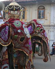 Kandy Perahera (IMG_3693b) (Dennis Candy) Tags: street red elephant heritage festival day culture buddhism parade holy sacred srilanka ceylon procession tradition serendipity hinduism kandy relic perahera serendib caparison serendip esala