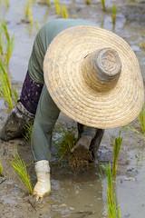 ChiangRai_7336 (JCS75) Tags: canon thailand asia asie chiangrai thailande