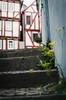 Green town (Stefan Baudach) Tags: green stairs 35mm town nikon dandelion treppe nikkor stufen löwenzahn unkraut treppenstufen