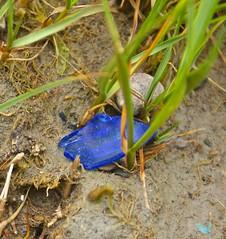 Hidden treasure (D. Brigham) Tags: blue beach glass grass outdoors seaglass eastboston beachcombing