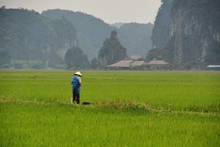 tam coc - vietnam 58