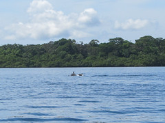 "Bahia de los Dolfines <a style=""margin-left:10px; font-size:0.8em;"" href=""http://www.flickr.com/photos/127723101@N04/27263073831/"" target=""_blank"">@flickr</a>"