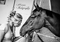 Out of Trouble (EASY GOER) Tags: park horses horse sports belmont racing races thoroughbred equine