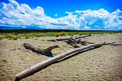 spiaggia (lotti roberto) Tags: sea italy tree beach sand italia mare tuscany toscana albero tronco spiaggia vecchiano seascap