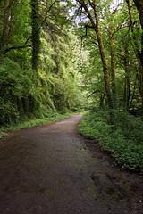 Nice Mixed Terrain Riding in Forest Park (Franklyn W) Tags: oregon portland pdx forestpark bikeriding nwportland twitter mixedterrain tumblr leifericksontrail