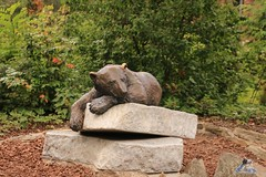 Zoo Berlin 19.06.2016   072 (Fruehlingsstern) Tags: berlin zoo polarbear elefant katjuscha bär eisbär pinselohrschwein anchali seehund siddy seebär stachelschwein quastenstachler canoneos750 tamron16300
