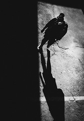 come to the dark side (Ran Elmaliach) Tags: blackandwhite white black monochrome lines dark photography israel blackwhite background side surreal gr ricoh ricohgr strret ranelmaliach