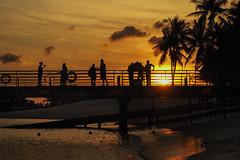 Silhouettes (elenaleong) Tags: beach singapore silhouettes palmtrees sentosaisland sentosasunset