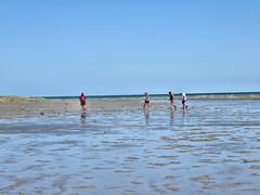 IMG_0192 (Tina A Thompson) Tags: sonora seashells mexico sealife seashell marinebiology tidepools seaofcortez marinelife chollabay mexicobeaches chollabaymexico