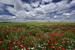 Pinceladas de color en Dueas (Anpegom fotografa) Tags: red espaa spain nubes palencia castillaylen amapolas dueas cerrato popies