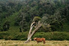Isla Mocha (Stephan Haecker) Tags: chile landscape mocha isla